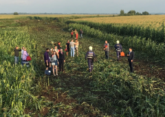 Video: Passenger jet makes emergency landing in maize field