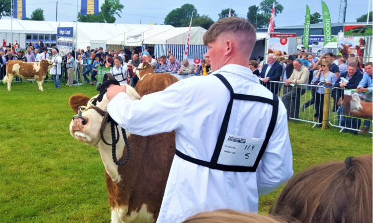 Site map: Find what's where at Tullamore Show 2019