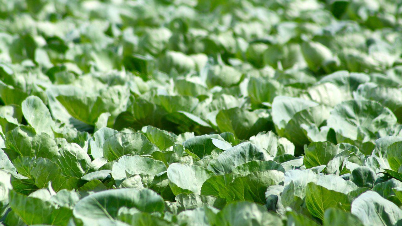 EU Food Safety Authority raises health concerns over chlorpyrifos