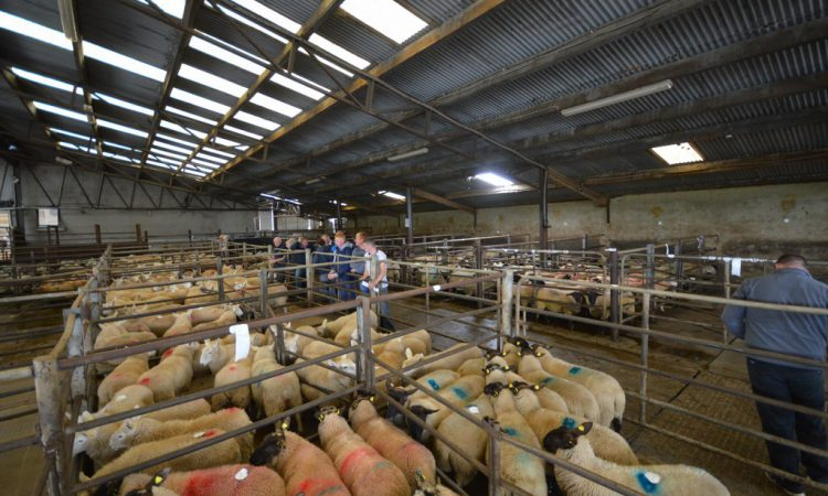 Sheep marts: Factory price cuts affecting trade, but hoggets in high demand
