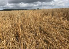 Tillage focus: Harvest becoming very difficult