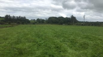 Report: Marginal decrease in values of prime grassland