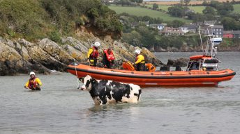 Video: Freezin' Friesian rescued following cliff 'tumble'