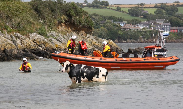 Video: Freezin' Friesian rescued following cliff 'tumble'