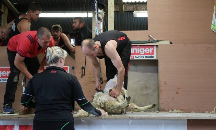 Sheep-shearing record smashed in Co. Cavan