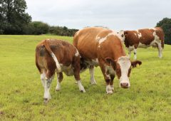 Opinion: 'The Irish beef industry will never be the same again' – Dr. Paddy Wall