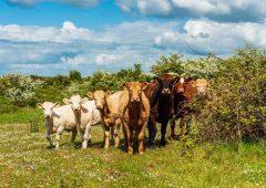 10 Farming for Nature ambassadors announced