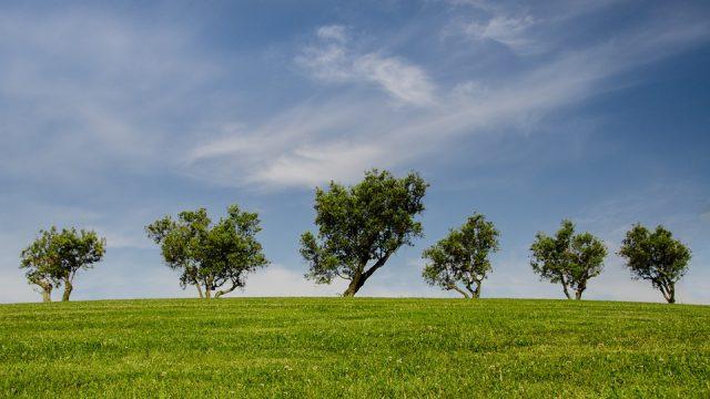 Ciaran Fitzgerald: Environmental Pillar exit from Agri-Food Strategy not surprising