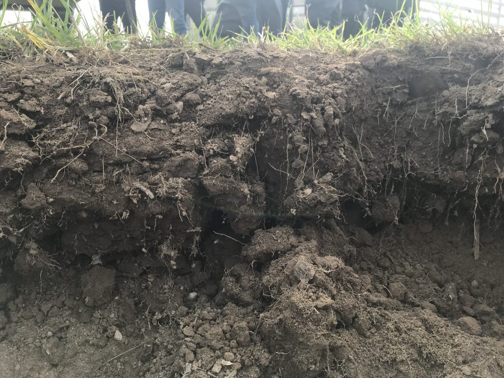 The importance of soil – our roots have taught us