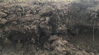 Improving soil health…10 tips