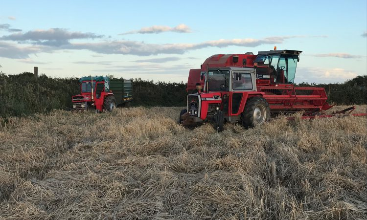 Readers' pics: Harvest, ploughing and sunflowers
