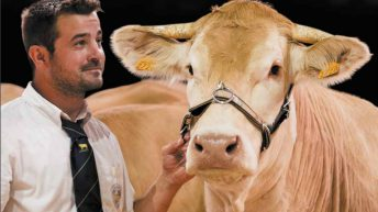 European livestock show gets green light from organisers