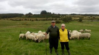 Sheep focus: Sheep farming in the heart of the Wicklow Mountains