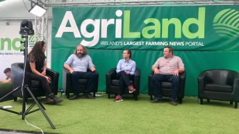 'We're warning dairy farmers about the volume of bull calves this spring' – Teagasc