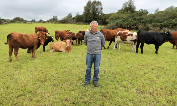 'I've done it all and I can't make a penny' – top performing suckler farmer
