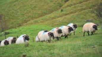 'Hill farms need environmental scheme in next CAP' – IFA