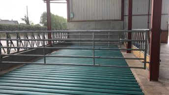 Rubber mats vs. concrete slats – which provide the best animal performance?