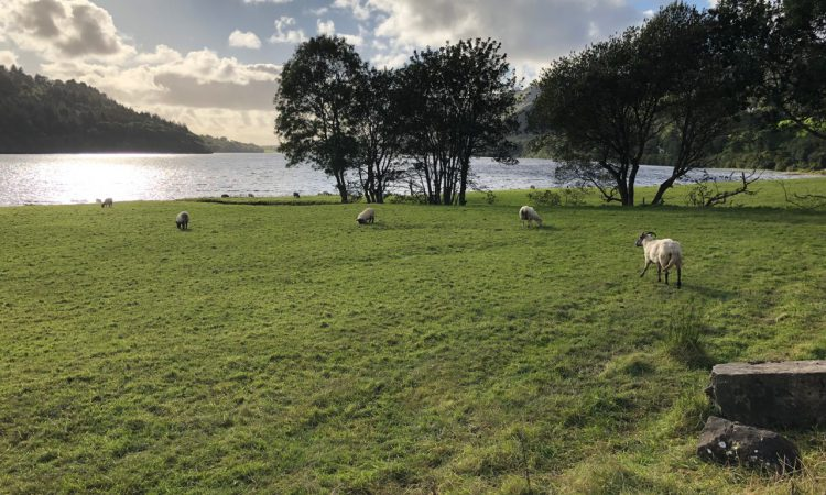 Sheep Conference 2019: 'Future-Proofing your Sheep Enterprise' starts today