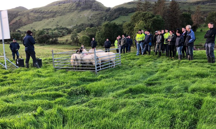 How can you minimise the risk of disease on your sheep farm?