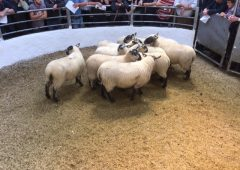 Aughrim Sheep Breeders host 52nd annual sale