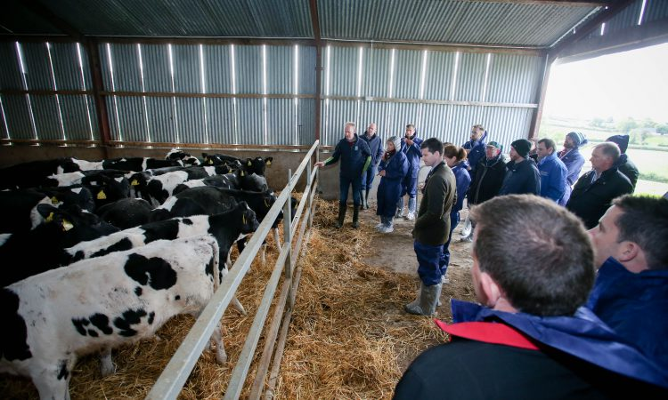 Loughbrickland dairy farmer hosts EU Sustainable Dairy Farm Visit