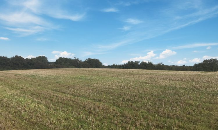 14ac roadside holding in Blackwater, Co. Wexford, for auction