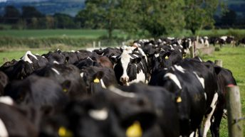 Dairy conference: How we can reduce the emissions from 100,000 dairy cows…