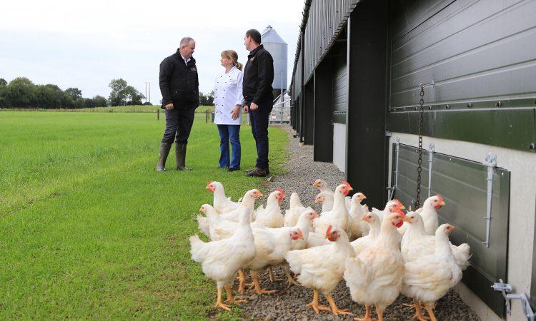 Video: Cavan chicken secures contract with 'Ireland's largest hotel operator'