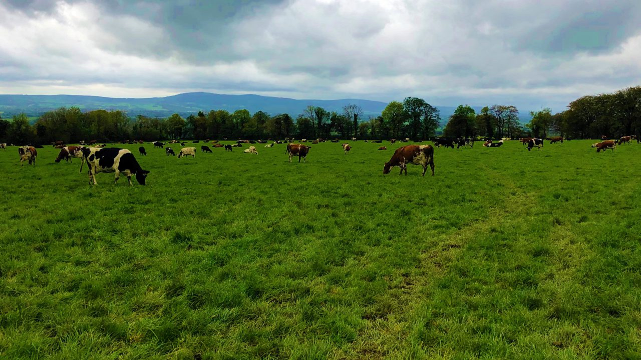 Dairy focus: Swapping black and white for red and white in Co. Cork