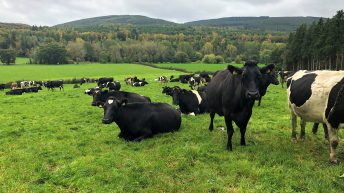 Dairy focus: Halving the milking time of 450 cows with a 50-bale rotary in Co. Cork
