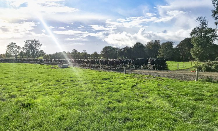 IGA Student Conference: Family-run farm heading for over 400 cows in Co. Kilkenny