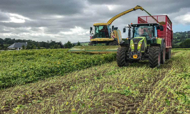 Tillage focus: Wholecrop soybean harvest in Co. Wicklow