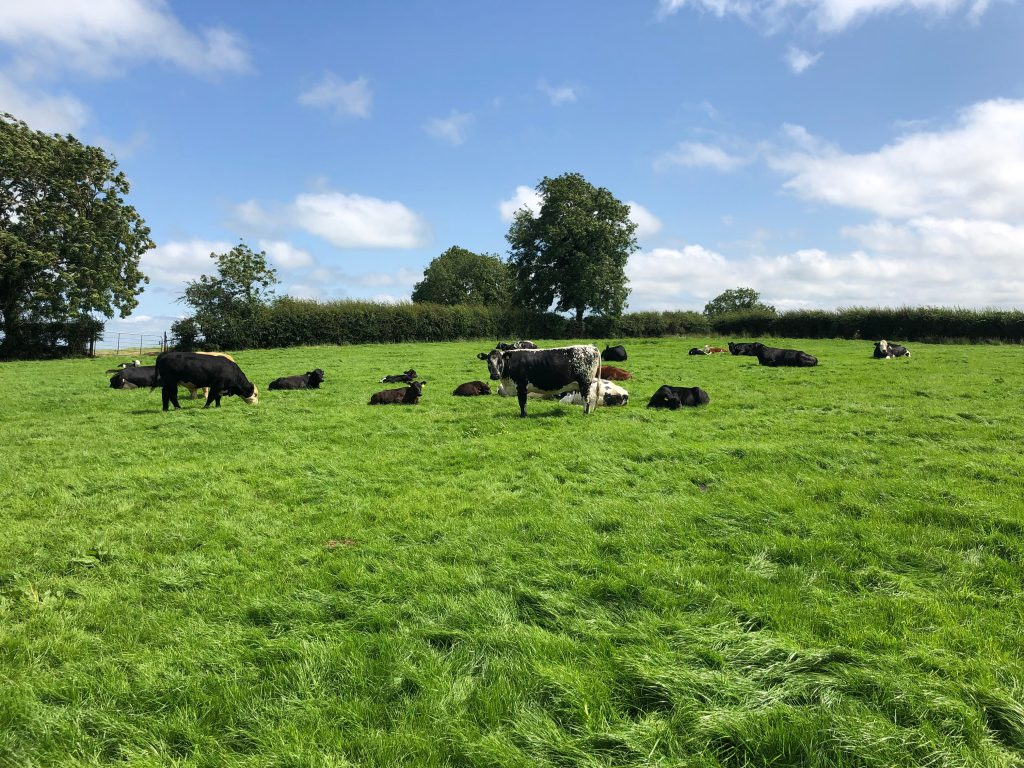 Organic sector 'failed' and undersubscribed scheme 'must serve as wake-up call'