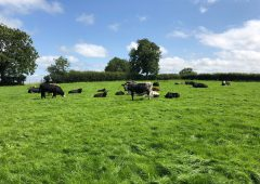 Minister 'needs to explain' rejection of 75% of organic farming applications