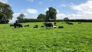 CAP: Increased budget for organic farming welcomed -IOA