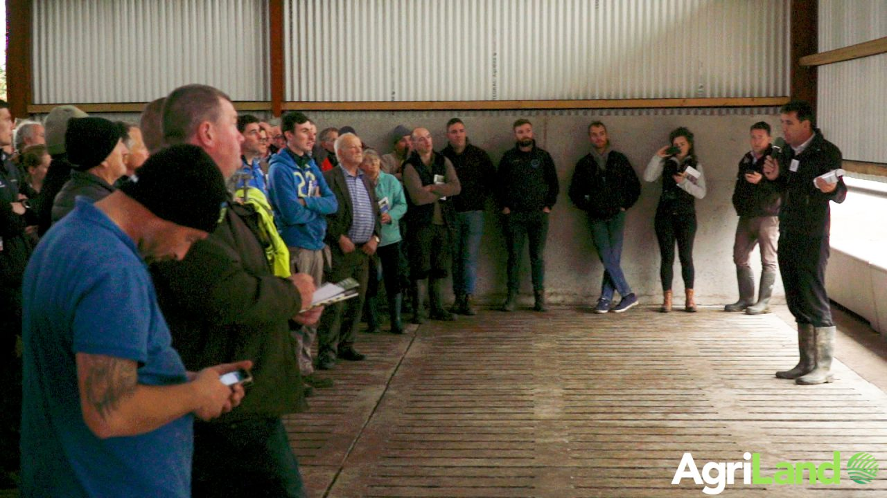 What level of profitability can beef farmers expect if they acquire dairy calves for free?