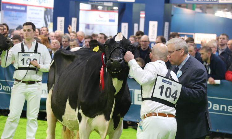 Entries now open for Royal Ulster Winter Fair