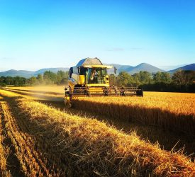 Dairygold finalises cereal prices for 2021 harvest