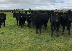 Newly formed 'calf club' seeking farmers to rear calves nationwide