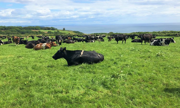 Top spring-calving dairy farmers making €992/ha more than the average