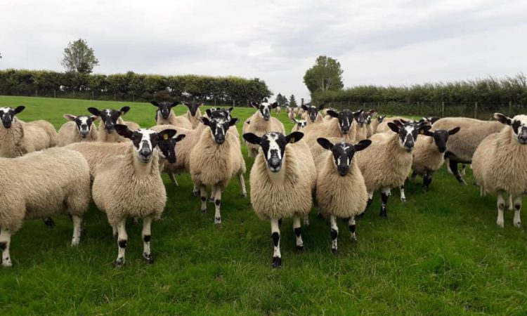 Donegal Mule Group set to hold reduction sale