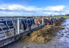 Dairy expansion not being matched to winter housing facilities