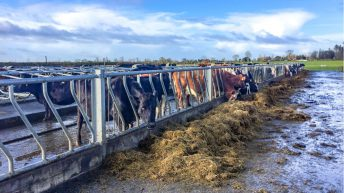 'The dry cow – fresh cow transition accounts for 80% of herd health problems'