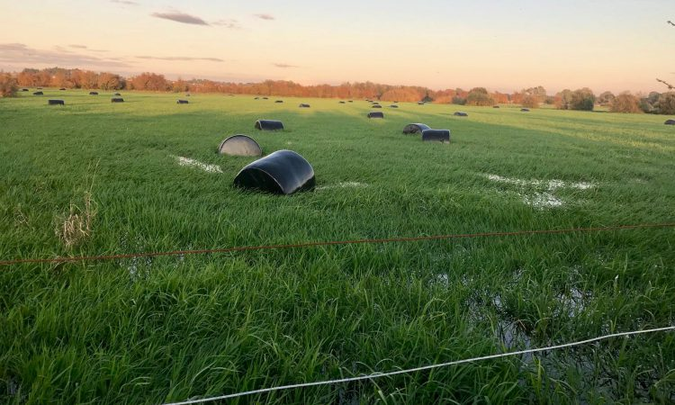 Grass growth: Heavy rain forces some farmers to house and feed silage