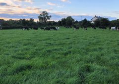 Grass-fed standards for beef and dairy 'at advanced stage'
