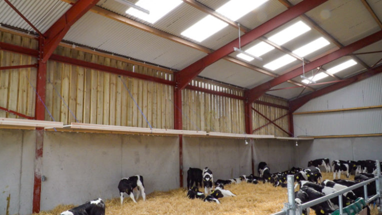 Video: Important factors to consider when it comes to calf accommodation