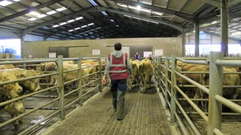Mart Managers of Ireland to meet department officials