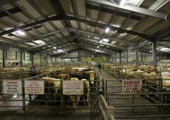 3 support measures sought to ensure marts 'can continue after Covid-19'