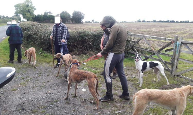 3 poachers detained by Gardaí in Kildare