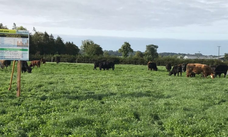Host of Teagasc events postponed due to weather